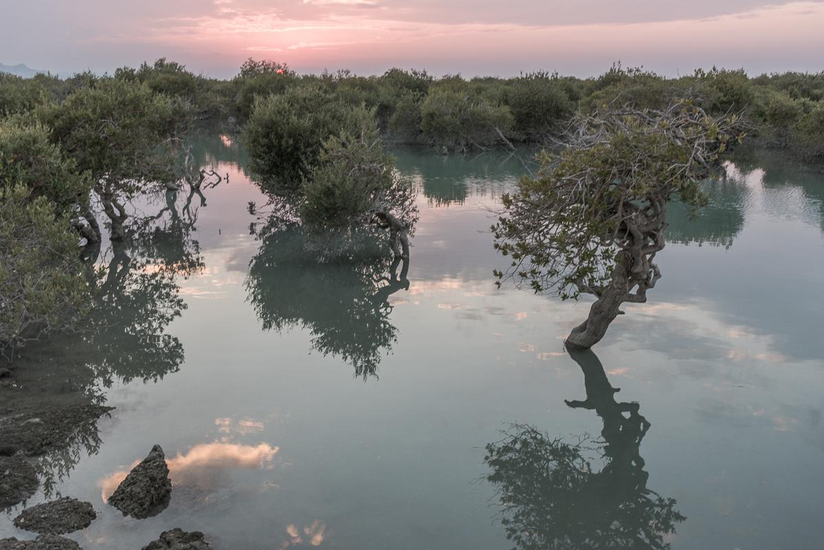 Zonsondergang op Qeshm in Hara mangrove bos